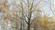 foto-galishovskoe-ohotniche-ugode-05
